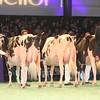 SwissExpo2017_Holstein_IMG_9572