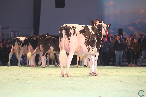 SwissExpo2017_Holstein_IMG_9620