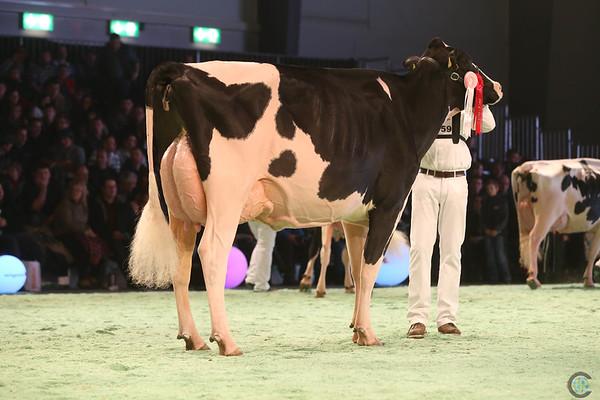 SwissExpo2017_Holstein_IMG_9890