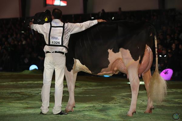 SwissExpo2017_Holstein_L32A1343