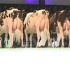 SwissExpo2017_Holstein_IMG_9575