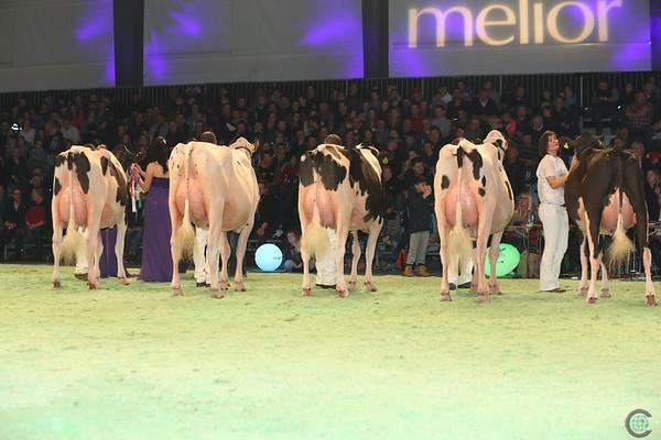 SwissExpo2017_Holstein_L32A1040