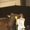 SwissExpo2017_Holstein_IMG_9736