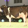 SwissExpo2017_Holstein_IMG_9758