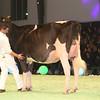 SwissExpo2017_Holstein_IMG_9629