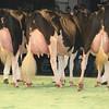 SwissExpo2017_Holstein_L32A1218