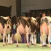 SwissExpo2017_Holstein_IMG_9876
