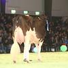 SwissExpo2017_Holstein_IMG_9747