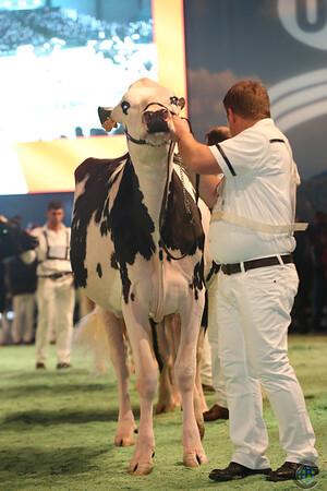 SwissExpo2017_Holstein_L32A1142