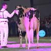 SwissExpo2017_Holstein_L32A1339