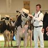 SwissExpo2017_Holstein_L32A1091