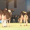 SwissExpo2017_Holstein_IMG_9904