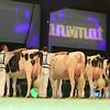 SwissExpo2017_Holstein_L32A1037