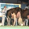 SwissExpo2017_Holstein_L32A1201