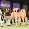 SwissExpo2017_Holstein_IMG_9561