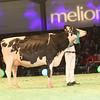 SwissExpo2017_Holstein_IMG_9625