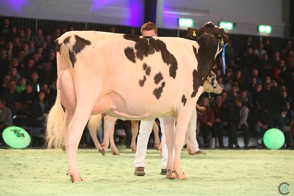 SwissExpo2017_Holstein_IMG_9604