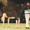 SwissExpo2017_Holstein_L32A1175