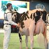 SwissExpo2017_Holstein_L32A1088