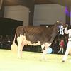 SwissExpo2017_Holstein_IMG_9732