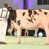 SwissExpo2017_Holstein_IMG_9641