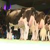 SwissExpo2017_Holstein_IMG_9704