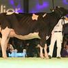 SwissExpo2017_Holstein_L32A1114