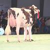 SwissExpo2017_Holstein_IMG_9668