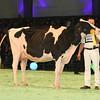 SwissExpo2017_Holstein_L32A1118