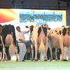 SwissExpo2017_Holstein_L32A1131