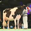 SwissExpo2017_Holstein_L32A1058