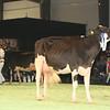 SwissExpo2017_Holstein_L32A1224