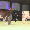 SwissExpo2017_Holstein_IMG_9516