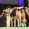 SwissExpo2017_Holstein_L32A1035