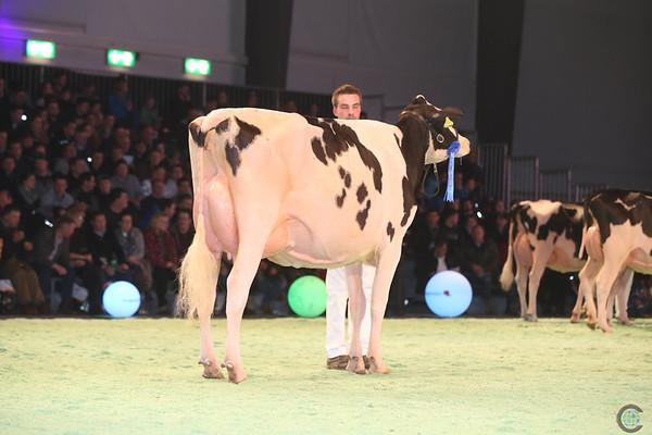 SwissExpo2017_Holstein_IMG_9618