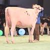 SwissExpo2017_Holstein_IMG_9509