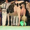 SwissExpo2017_Holstein_L32A1036