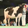SwissExpo2017_Holstein_L32A1062
