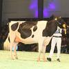 SwissExpo2017_Holstein_IMG_9665