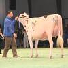 SwissExpo2017_Holstein_IMG_9523