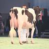 SwissExpo2017_Holstein_IMG_9507