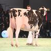 SwissExpo2017_Holstein_IMG_9605