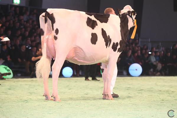 SwissExpo2017_Holstein_IMG_9518