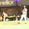 SwissExpo2017_Holstein_IMG_9743