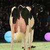 SwissExpo2017_Holstein_L32A1385