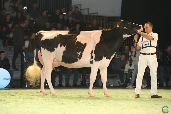 SwissExpo2017_Holstein_L32A1380