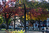 Fall foliage in Cambridge Common