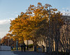 Fall foliage around Harvard Yard