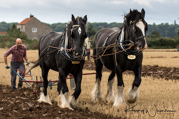 Beauty and Prince ploughing