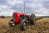 705 UYU Massey Ferguson 35 Best turned out tractor on the day.